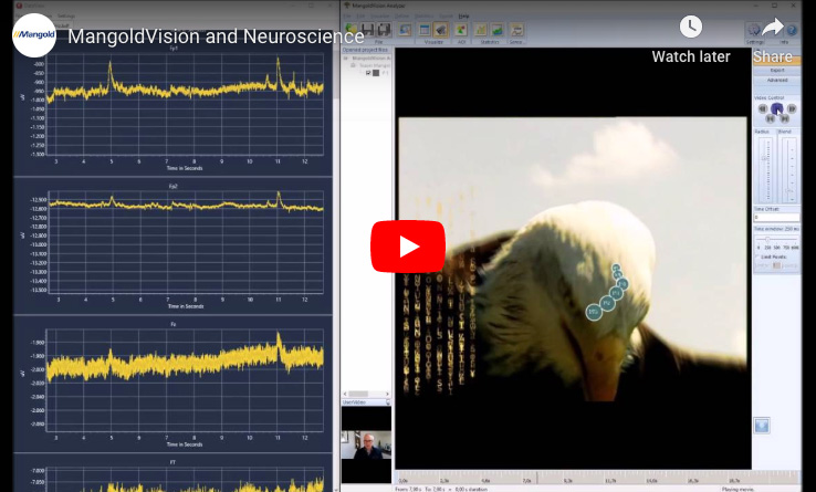 MangoldVision and Neuroscience - Combining Eye Tracking and Brain Research